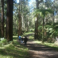 24 Dandenong Ranges National Park_89#